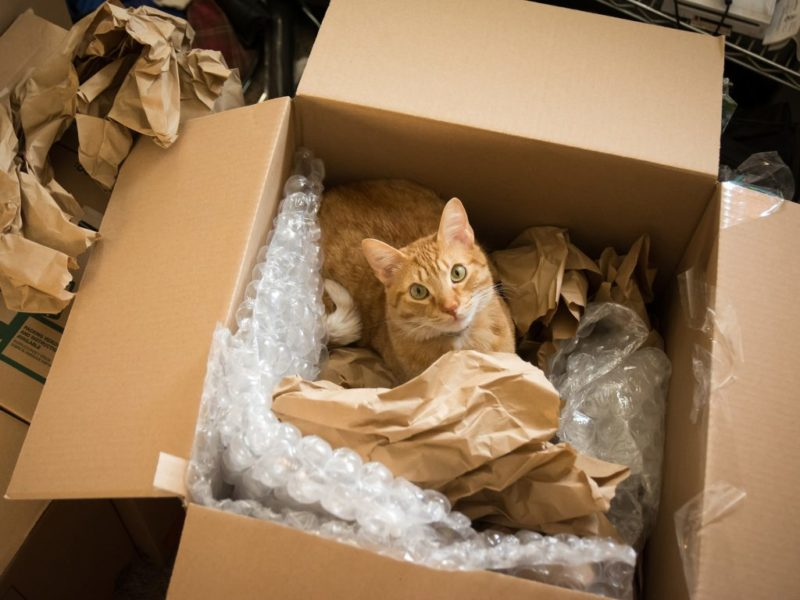 tips on moving with pets in edmonton